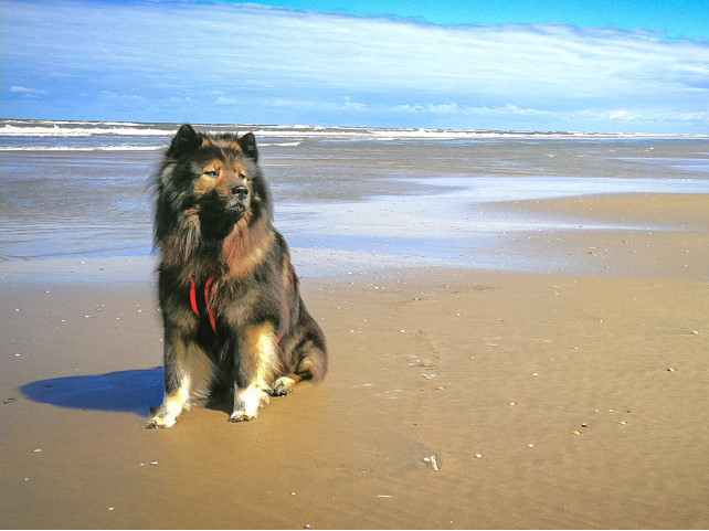 Hundestrand Noordwijk urlaub mit huisdier